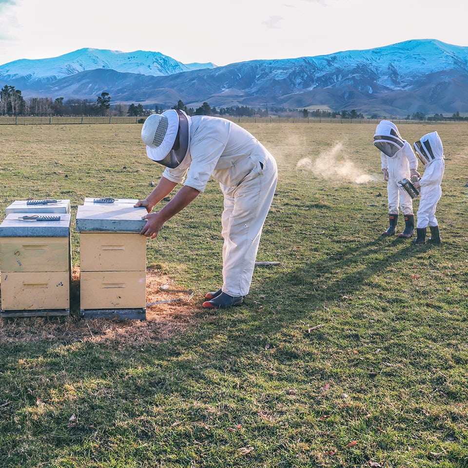 Westlands-Honey_Fairlie_Mackenize-District_South-Canterbury_New-Zealand_family-beekeepers_Gallery
